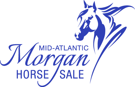 Mid-Atlantic Morgan Horse Sale