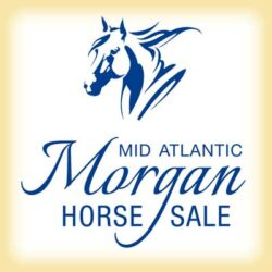 2019 Mid-Atlantic Morgan Sale