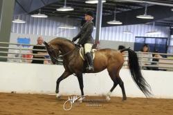 039 Arabian Hunter Pleasure ATR Select