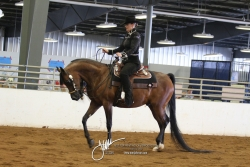 058 Arabian Western Pleasure Jr Horse