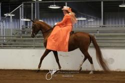 072 Open Ladies Sidesaddle