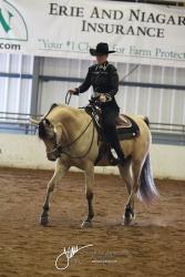 080 HA Western Pleasure Jr Horse