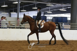 087 A-HA Hunt Seat Equitation