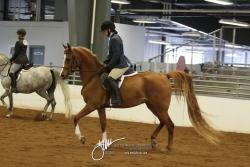 090 Arabian Hunter Pleasure Jr Horse