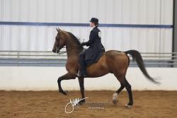 094 MOR Classic Pleasure Saddle
