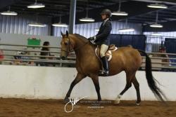 104 MOR Sport Horse Under Saddle Open