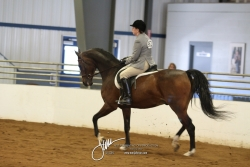 105 HA Sport Horse Under Saddle Open
