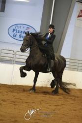 108A Open Park Horse