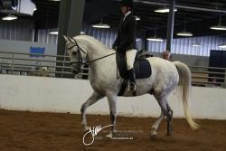 109 HA Sport Horse Under Saddle ATR