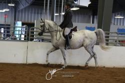 114 Arabian Sport Horse Under Saddle ATR
