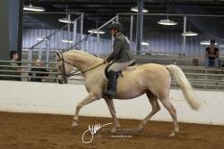 115 HA Sport Horse Under Saddle AOTR