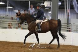 116 Arabian Hunter Pleasure JOTR