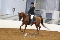 118 Arabian Sport Horse Show Hack