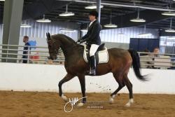 120 HA Sport Horse Show Hack