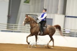 402-403 Walk-Trot Saddle & Hunt Seat 13 & Under