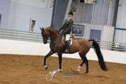 159 Arabian Hunter Pleasure AATR Championship