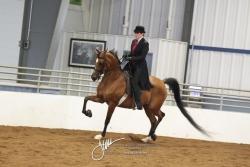 177 Arabian English Pleasure Championship