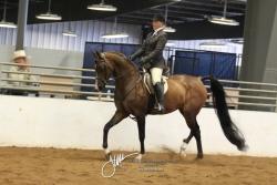 175 Arabian Hunter Pleasure Open Championship