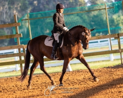 Dressage Under Saddle – IBOP