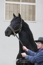 Tuesday Stallions