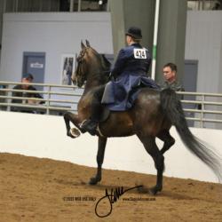 39B MOR Park Saddle Ladies