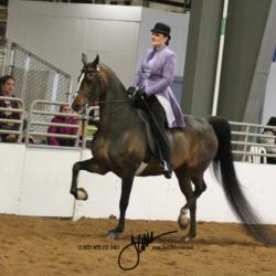 36 MOR Classic Saddle Open