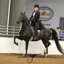 43 MOR Classic Saddle Jr or Novice
