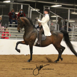 51 MOR Classic Saddle Jr Exhibitor