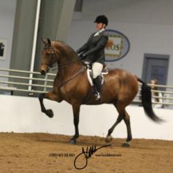 54 MOR Hunt Seat Equitation