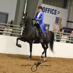 58 MOR Classic Saddle Limit