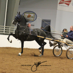 Jenny's Horse