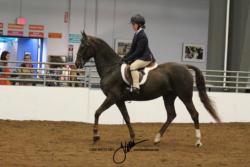 33 MOR Walk-Trot Hunt Seat Equitation