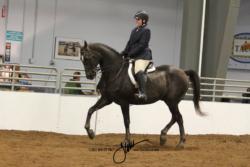 31 MOR Sport Horse Under Saddle