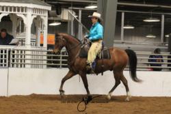 28 MOR Ranch Horse Pleasure