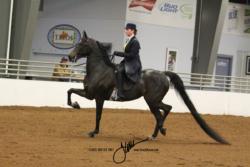 23 MOR AOTS Saddle Seat Pleasure