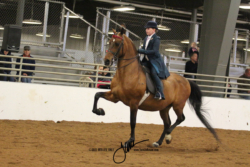 21 MOR Walk-Trot Saddle Seat Equitation