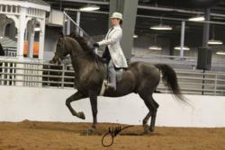 74 MOR Saddle Seat Equitation