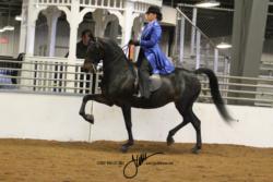 71 MOR Classic Saddle Ladies