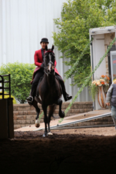 79 MOR Park Saddle Open