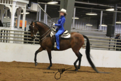 83 MOR Western Seat Equitation