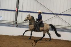 84 MOR Ranch Horse Riding