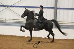 85A MOR Park Saddle Jr or Novice
