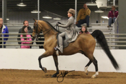 87 MOR Walk-Trot Saddle Seat Equitation Championship