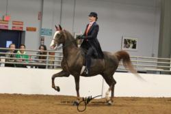 91 MOR Classic Saddle Masters