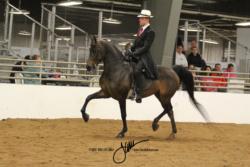 99 MOR Classic Saddle Jr Ex Championship
