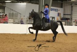 100 MOR AOTS Saddle Seat Championship