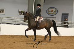 103 Generation Gap Hunt or Saddle Seat