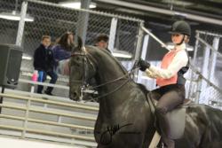 202-202B Academy Walk-Trot Saddle or Hunt Pleasure