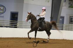 203-203B Academy Walk-Trot Equitation