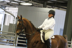 206-207 Academy Walk-Trot 14-17 Pleasure and Equitation